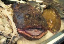 The Ultimate Guide to Monkfish 2