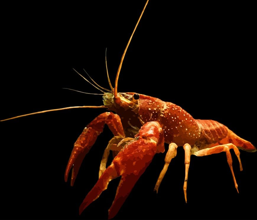 Fijian Fish - Crayfish