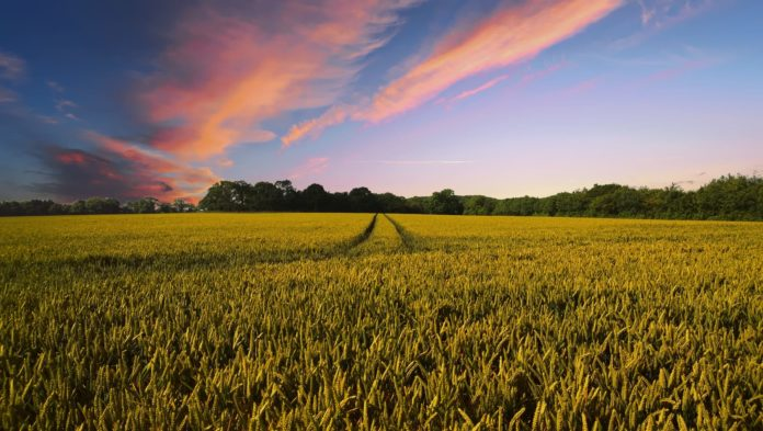 Natural Farming - Hero