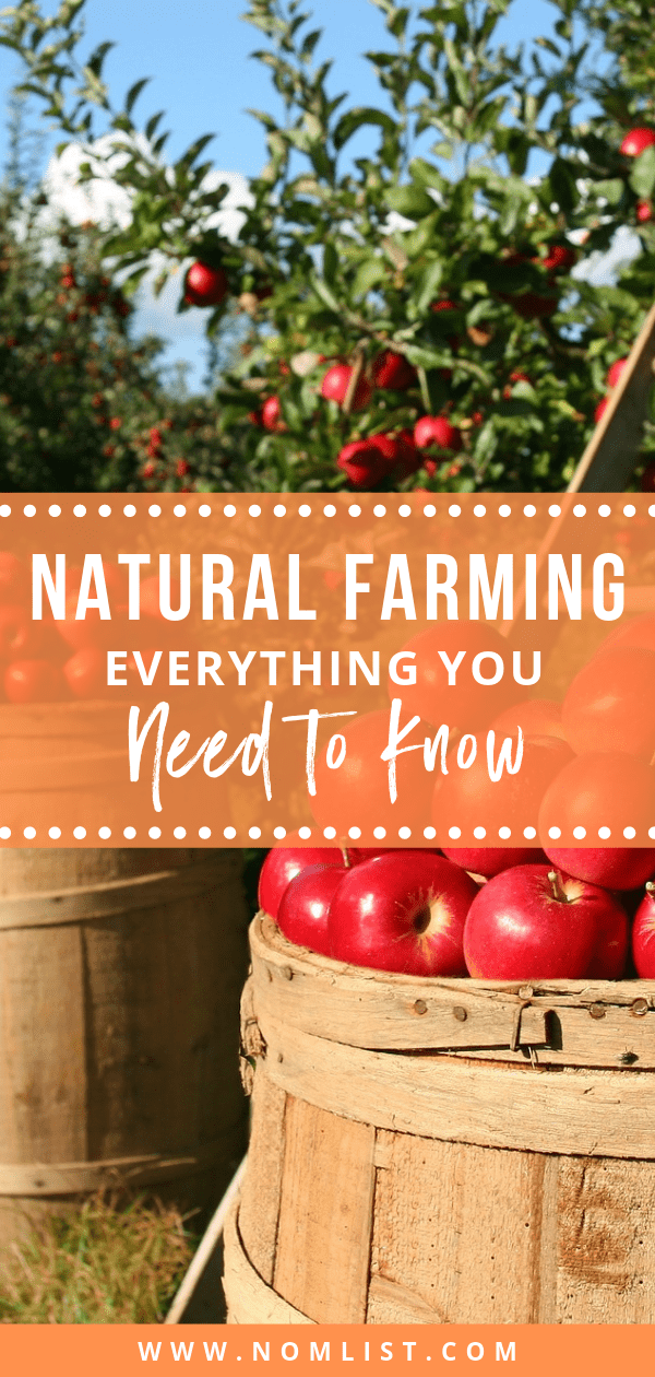 Some believe that human intervention is detrimental to farming. That's why natural farming is gaining popularity in the agriculture community. Here's everything you need to know about natural farming and why it's changing the way we eat. #naturalfarming #farming #farm #farmtotable #naturalfoods #organic #organicfoods #healthyliving #healthyeating