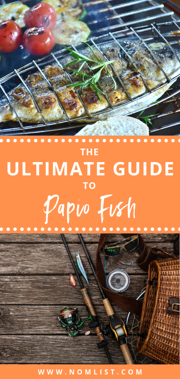 Since papio fish are very popular, especially in Hawaii, you'll be able to learn how to catch these types of fish and how to prepare it. Whether you're along the coast, love salt-water fishing, or crossing this off your Hawaiian bucket list, papio fish is a must eat in your lifetime! Below, we fished in all the tips and tricks for everything you need to know about papio! #fish #fishes #papio #papiofish #hawaiianfish #fishrecipes #oceanfish #fishing