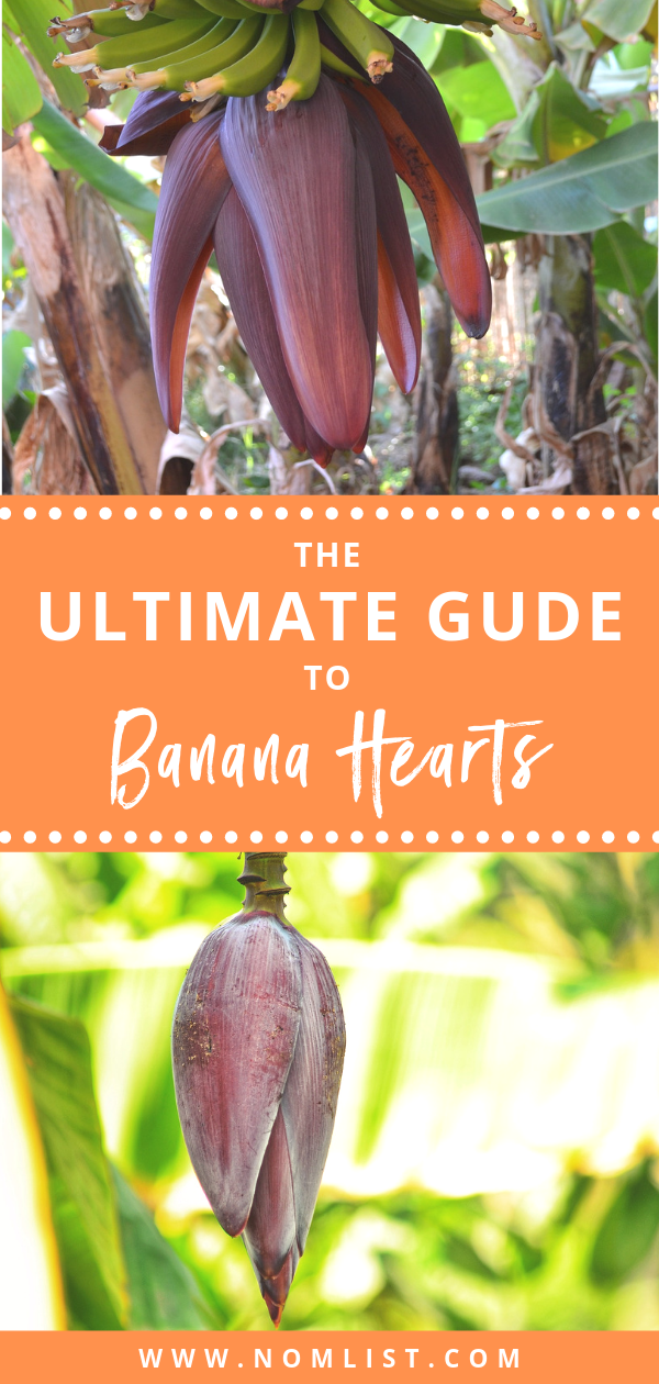 With their great taste, versatility, and incredible health benefits, everyone should be enjoying banana hearts. From curries to stir-fries, salads to eaten raw, there are just so many different ways to consume banana hearts. #bananahearts #bananas #banana #bananaheart #bananaplant #bananaheartrecipees #bananarecipes
