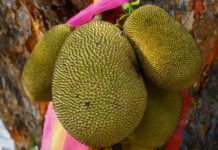Fruits in Ghana - Jackfruit