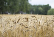 .Parboiled Rice Vs Basmati Rice